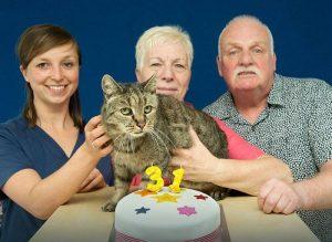 najstarszy kot na świecie - Nutmeg