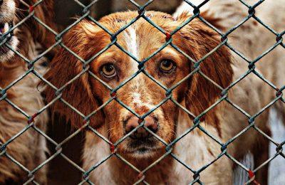 pies ze schroniska adopcja