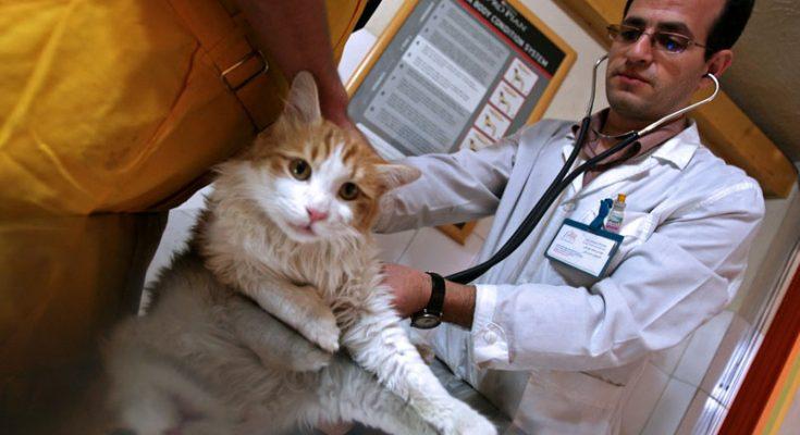 szczepimy kota