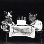 Ile lat żyją koty jak długo żyje kot