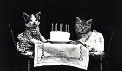 jak długo żyje kot, ile lat żyje kot