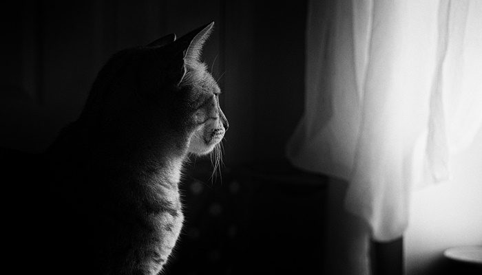 kot przy oknie